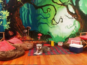 'Into the woods' theater backdrop Schnauzer scale reference.